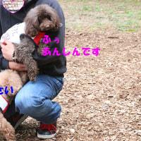 富士山の麓のドッグランへ リクまな楽し嬉し編