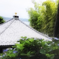 親戚会と紫陽花寺