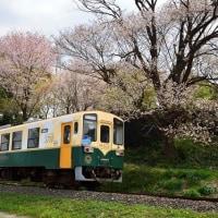 ひたちなか海浜鉄道・湊線-ネモフィラの咲くころ(2017)