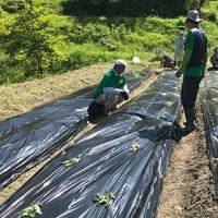 棚田ボランティア【草刈り、サツマイモ苗植付】