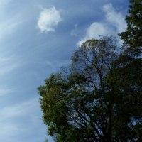 巻雲がきれいだった月曜日