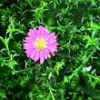 ご近所の花 in 岡山・倉敷市
