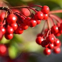 筥崎宮、花庭園から紅白の梅など(D5500、Ai AF Micro 60mm)