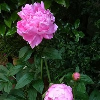 我が家の花達