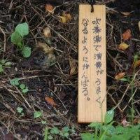 つつじ祭りが開催中の茶臼山公園で撮影