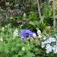緑化植物園とフォルクローレ