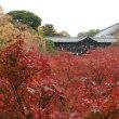 20141119京都 東福寺
