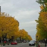 県庁前の銀杏並木&ブログ終了