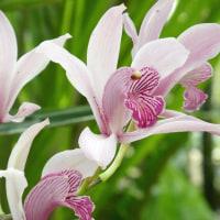 咲くやこの花館 (4)