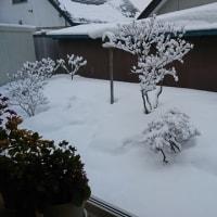 雪にも負けず\(^^)/