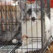 冬の準備とお家メンテと愛犬たち