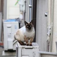 尼にゃん(38)