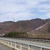 【速報】 光城山の桜の進捗状況について (2017/04/22)