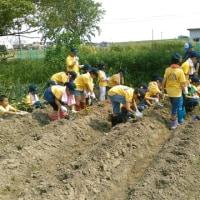 健民少年団 農業体験