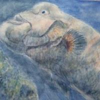 楽描き水彩画「水族館のコブダイ」