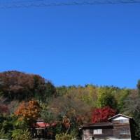 篠窪(しのくぼ)は冬に向けての衣替えが始まった 富士山が綺麗