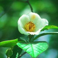 神代植物公園の咲いている花から
