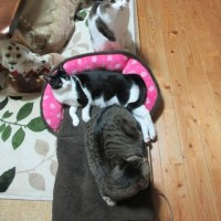 猫とさくらの日