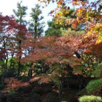 清流亭の紅葉