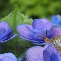 庭の花を訪れた虫たち