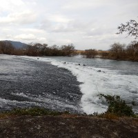 三野の河川敷散策 2017.02.06 「295」