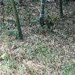 猫三昧 Cat-loving - 竹林猫:two cats in a bamboo forest