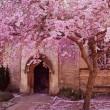 桜開花宣言