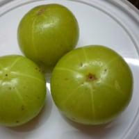 【インドのフルーツ】 ~アムラー ~