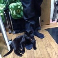 黒猫ジジィの徒然