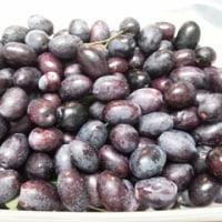 オリーブ収穫2016