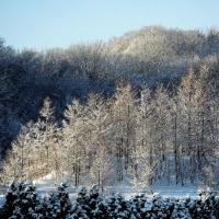 今朝はマイナス12度、美しい朝でした!