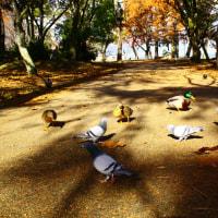 公園を散歩in大津市