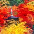 デジブック 『2012錦絵の秋』