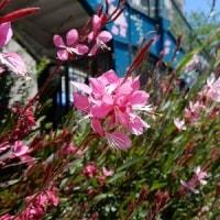 花のみちと周辺の花々、宝塚ホテル「ソラレス」でのランチ