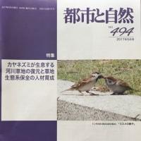 特集:カヤネズミが生息する河川草地の復元と草地生態系保全の人材育成