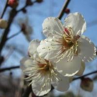 夜明け、梅の花、夕焼け