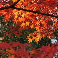 続・晩秋の龍福寺