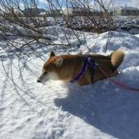 雪も好きなんだけれど…