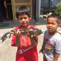 ヒキガエルと子供