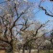 日帰り吉方位旅行 梅を見て、桜餅を買う。