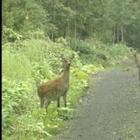 鹿対策として電気防護柵を講じます