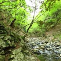 天気が良い日はのんびりと… 雨乞岳 vol. 3