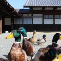 加茂荘花鳥園の鳥たち①  《屋外で見る鳥》