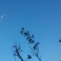 仙台の空12月2日