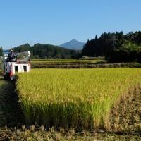 稲刈り~2016