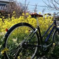 マスターブログ・春が来たぁ~♪