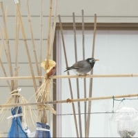 庭にくる鳥・・・