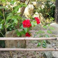 「 紅い花 」 という歌に 入れ込んでます
