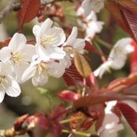 東吉野の桜と温泉