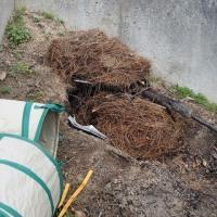 松葉を集めて、草木灰を作る。